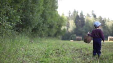 enfant promenade champs prairie nature tiques insecte piqûre